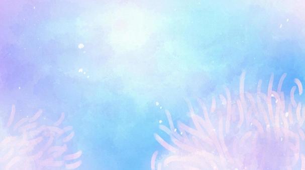 Sea anemone sea