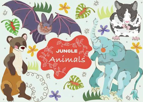 叢林中的動物1