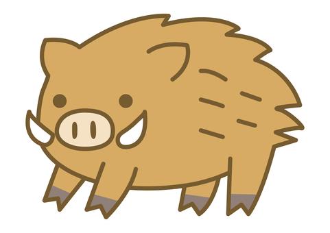 一隻可愛的野豬的插圖