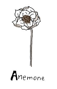 海葵乾花線描手繪