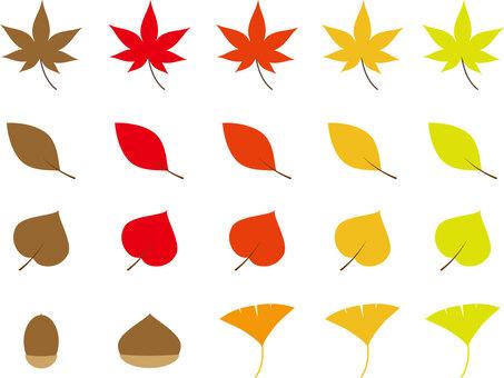 秋天的樹葉一套