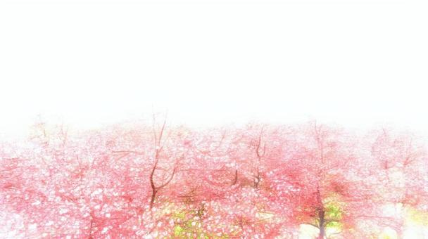 櫻花的季節