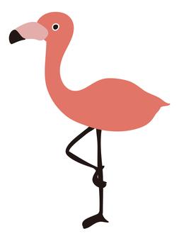 鳥/火烈鳥