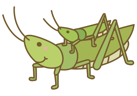 Illustration of cute Atractomorpha lata