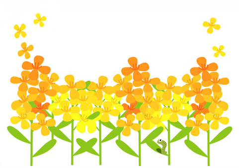 菜の花と芋虫