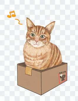 Tabby cat in a cardboard box