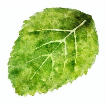 一片葉子幼葉水彩畫