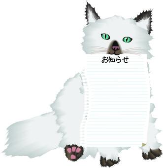 Cat Ragdoll Kind Pet Blank Paper