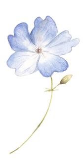 Small Flower 8 - Flowering