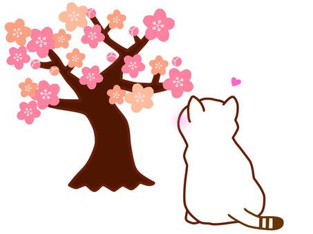 梅花樹和白貓