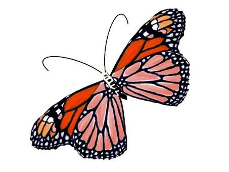 One butterfly monarch butterfly