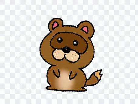 可愛的動物浣熊狗