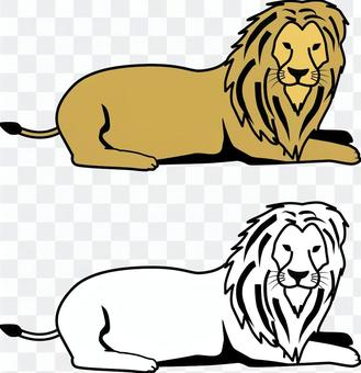 Lion carnivorous zoo Africa