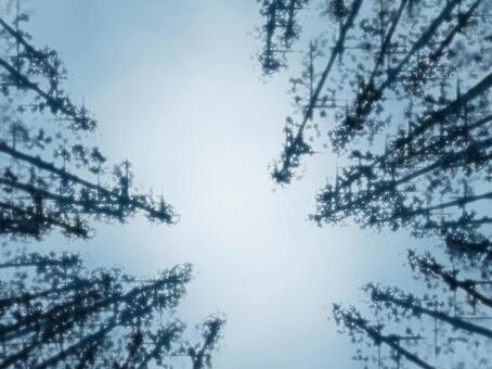 背景(森林,晨霧)
