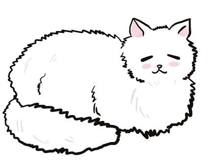 White cat cat sleep nap suyasuya