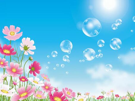 漂浮在波斯菊領域藍天背景01的肥皂泡沫