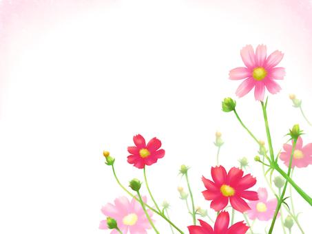 Flower frame card-Autumn cosmos side