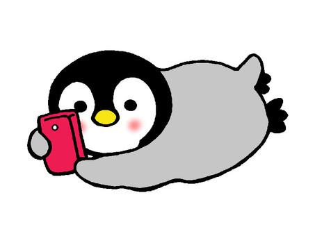 Penguin chicks watching smaho