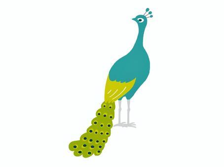 Peacock facing backwards