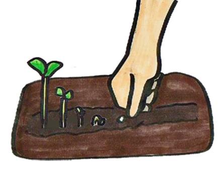 To germinate