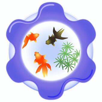 金魚-007