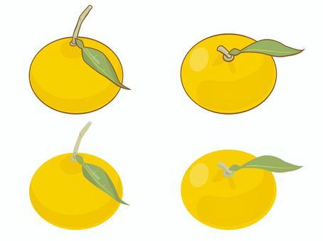 食品-柚子