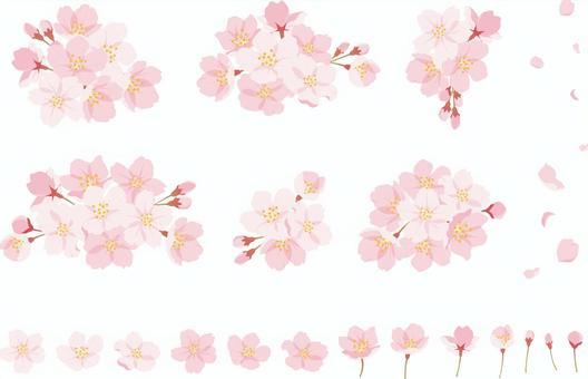 櫻花套裝1