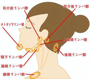 臉部周圍淋巴結的位置
