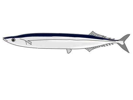 Illustration of fish saury Autumn taste