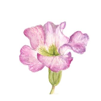 Flower 12 - Pink Primula