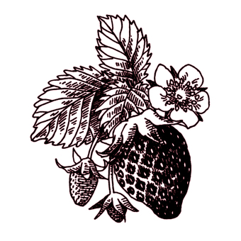 仿古筆繪圖草莓水果花葉