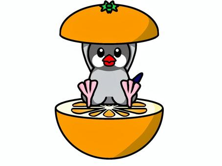 Java麻雀橙