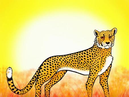 Grumpy cheetah