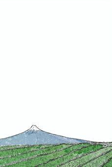후지와 차밭 엽서 (투명) 세로