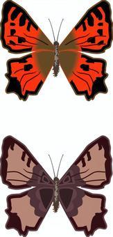 ヒオドシチョウ タテハチョウ科 昆虫