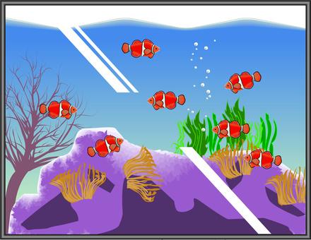 小丑魚鑑賞魚繁殖水族館