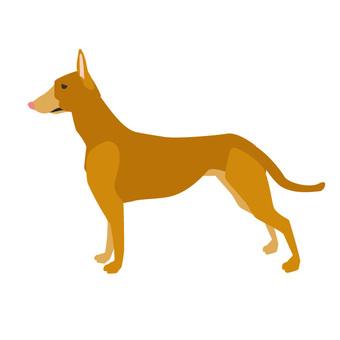 法老王獵犬