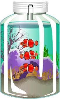 水族館小丑魚