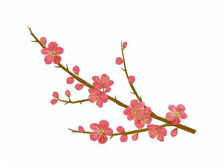 紅梅花冬花