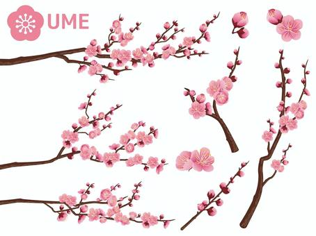 Cut out branches of New Year plum _ light pink 03