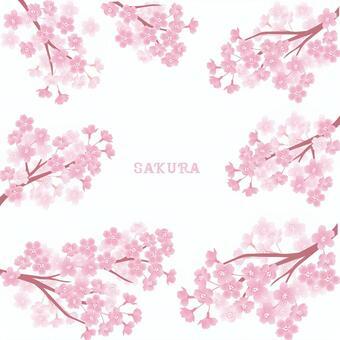 Sakuraba套
