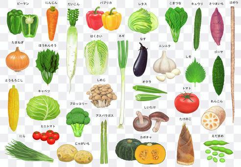 Vegetable illustration set with name