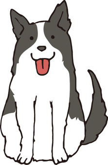 Dog (Border Collie)