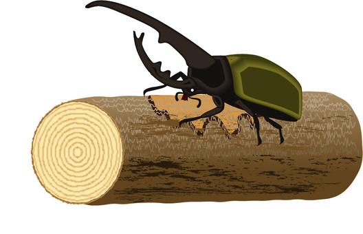 甲蟲外國赫拉克斯夏天臭蟲