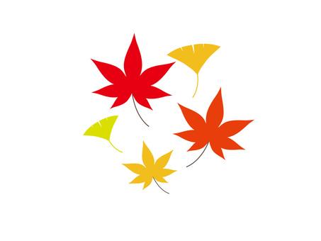 彩色的葉子和莖