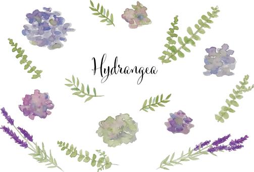 秋色繡球花和薰衣草水彩套裝