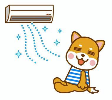 エアコン 夏 柴犬 犬