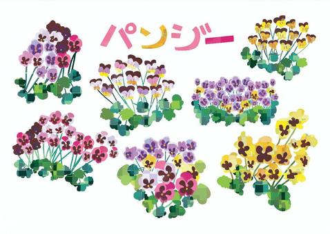 Pansy ALL
