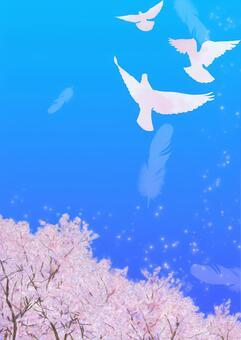 비둘기가 날고 푸른 하늘 벚꽃 a2