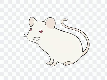 白化鼠(滑鼠)